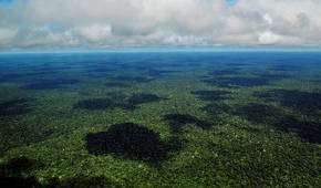 Looking across the Rain Forest with NatGeo - see more